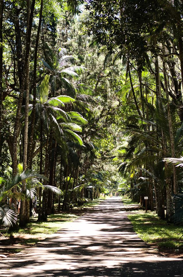 Magical-Mauritius---52